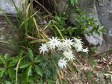 Flannel Flowers Manly oct